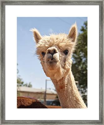 What Are You Lookin' At Framed Print