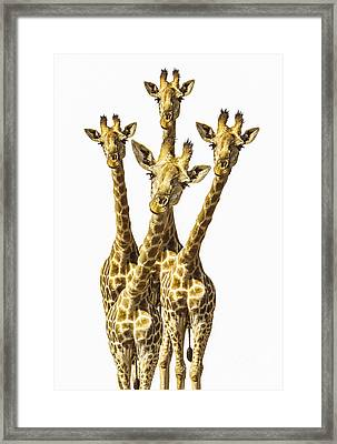 What Are You Looking At? Framed Print by Diane Diederich