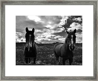 What Are You Looking At Framed Print by Greg Kear