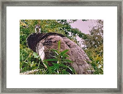 What Are You Looking At Framed Print