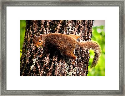 What Are You Looking At Framed Print by Tara Potts