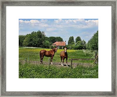 What Are You Staring At? Framed Print by Bedros Awak