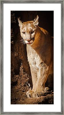 What Big Paws Framed Print