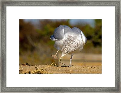 What Did I Just Step In? Framed Print
