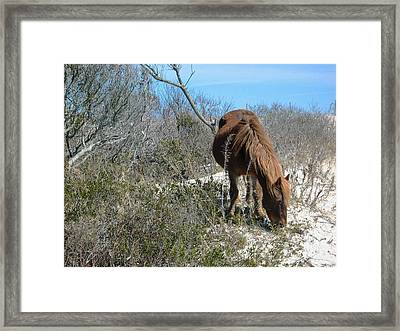 Framed Print featuring the photograph What Do I See Here? by Photographic Arts And Design Studio