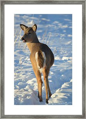 What Do You Think This Deer Is Saying? Framed Print