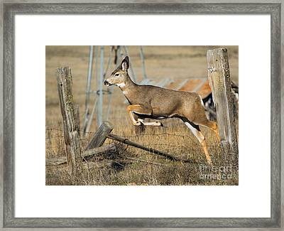 What Fence Framed Print by Mike  Dawson