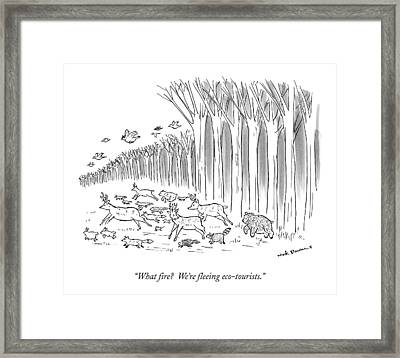 What Fire?  We're Fleeing Eco-tourists Framed Print by Nick Downes