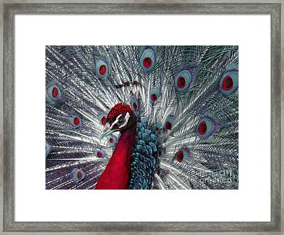 What If - A Fanciful Peacock Framed Print by Ann Horn