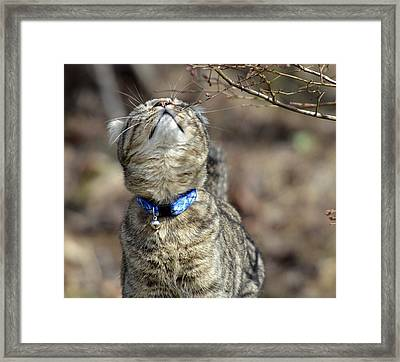 What Is That Framed Print by Susan Leggett
