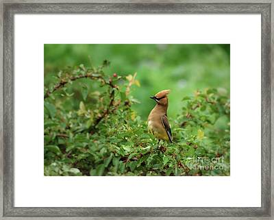 What? Framed Print by Kenny Glotfelty