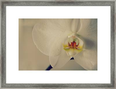 What Love Felt Like Framed Print by Laurie Search