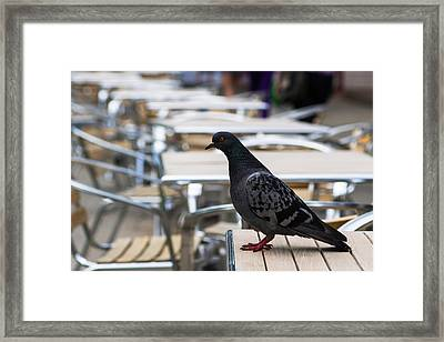 What? No Coffee? - Featured 2 Framed Print