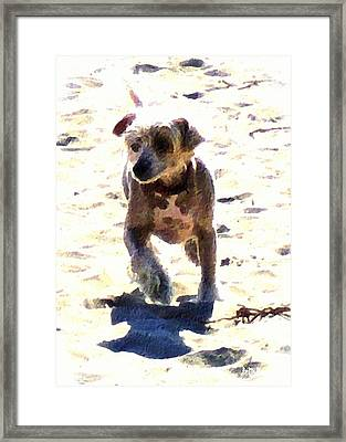 What Shall We Call Him? Framed Print by Brian D Meredith