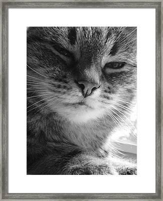 What Framed Print