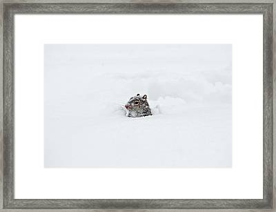 What The ... Framed Print