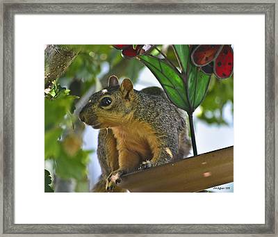 What Was That? Framed Print by Allen Sheffield