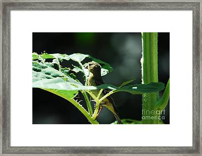 What Was That? Framed Print by Laurianna Taylor