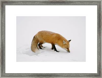 Framed Print featuring the photograph What Was That by Sandra Updyke