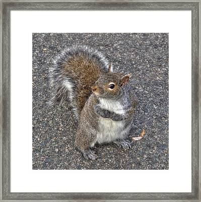 What You Looking At? Framed Print by Joann Vitali