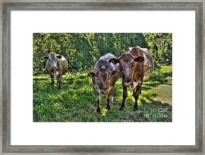 What You Looking At? Framed Print by Kaye Menner