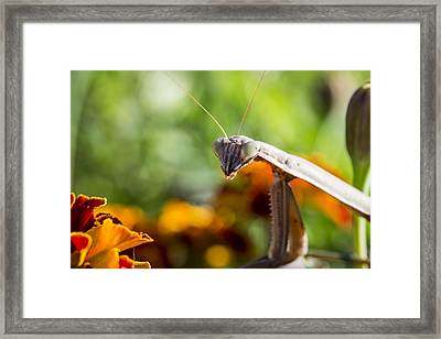 Whataya Lookin At Framed Print by Andrew Pacheco