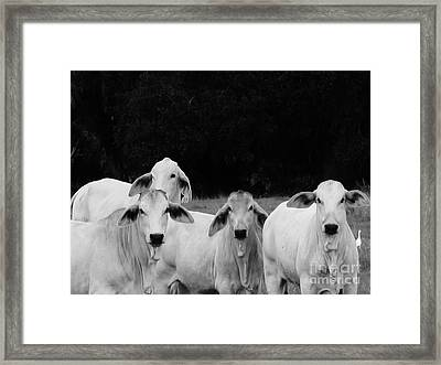 Whatchu Lookin At Framed Print