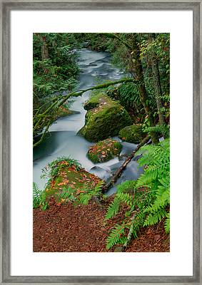 Framed Print featuring the photograph Whatcom Falls 1 by Jacqui Boonstra