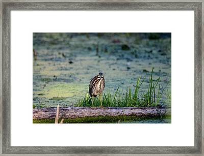Framed Print featuring the photograph Whatcou Lookin' At? by David Porteus