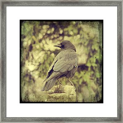 Whatever Comes His Way Framed Print by Gothicrow Images