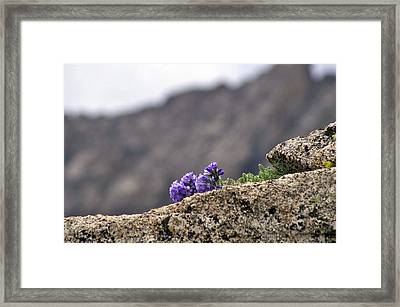 Whatever It Takes Framed Print
