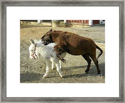 Framed Print featuring the photograph What's A Bite Amongst Friends by Emmy Marie Vickers