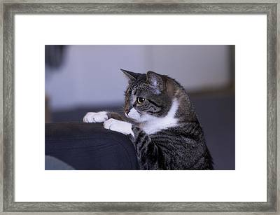 What's Going On Up Here? Framed Print