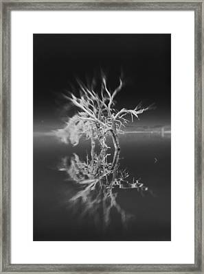 Whats Left Black And White Framed Print by Scott Campbell