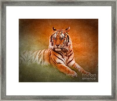 What's New Pussycat? Framed Print by Betty LaRue