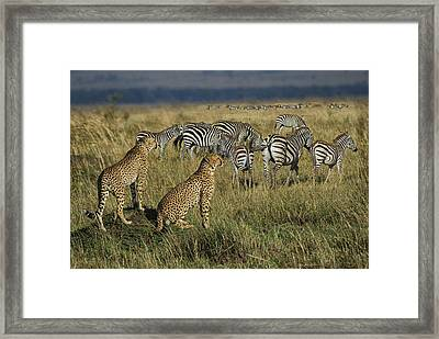 What's On The Menu? Framed Print