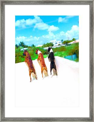 What's Out There  Framed Print by Javier Correa