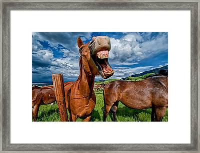 What's So Funny Framed Print