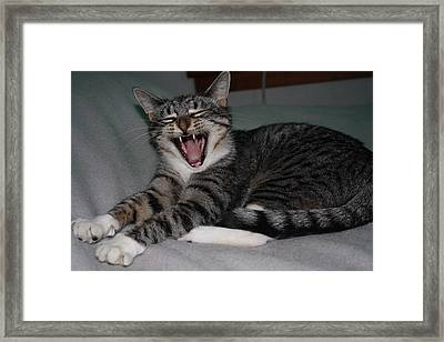 What's So Funny Framed Print by William Mathein