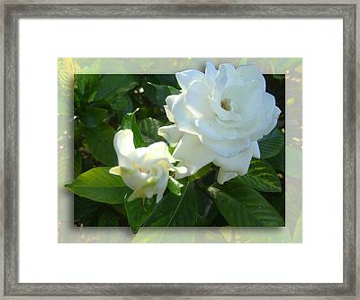 Whats So Special About White Flowers Framed Print by Ginny Schmidt