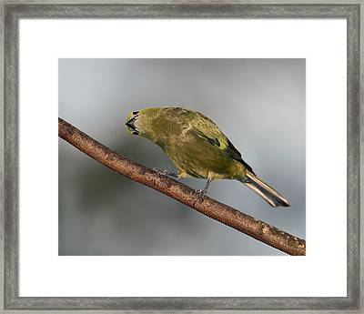 What's Up And Down Framed Print by Tony Beck