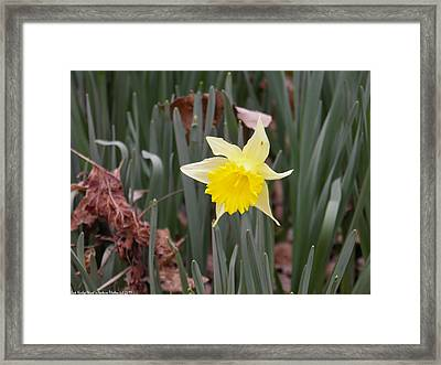 Framed Print featuring the photograph Whats Up Buttercup by Nick Kirby