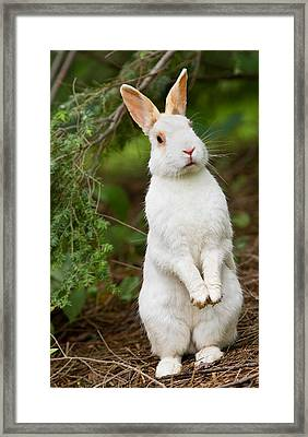 What's Up Doc Framed Print by Bill Wakeley