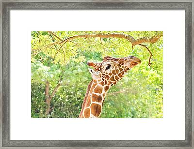 What's Up Here Framed Print