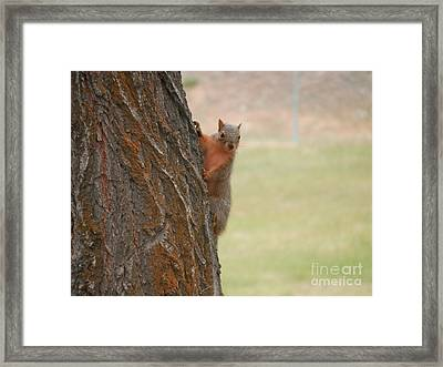 What's Up? Framed Print by Margaret McDermott