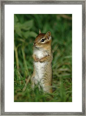 Framed Print featuring the photograph Whats Up by Sandra Updyke