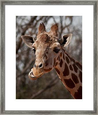 What's Ya Talking About? Framed Print