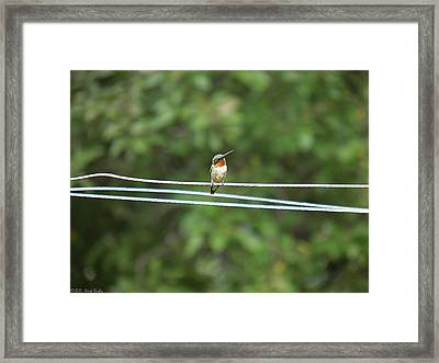 Whats You Talkin Bout  Framed Print by Nick Kirby