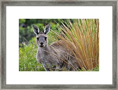 What'ya Lookin' At? Framed Print by Sally Nevin