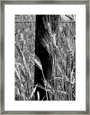 Framed Print featuring the photograph Wheat And Fence Post by Ellen Tully